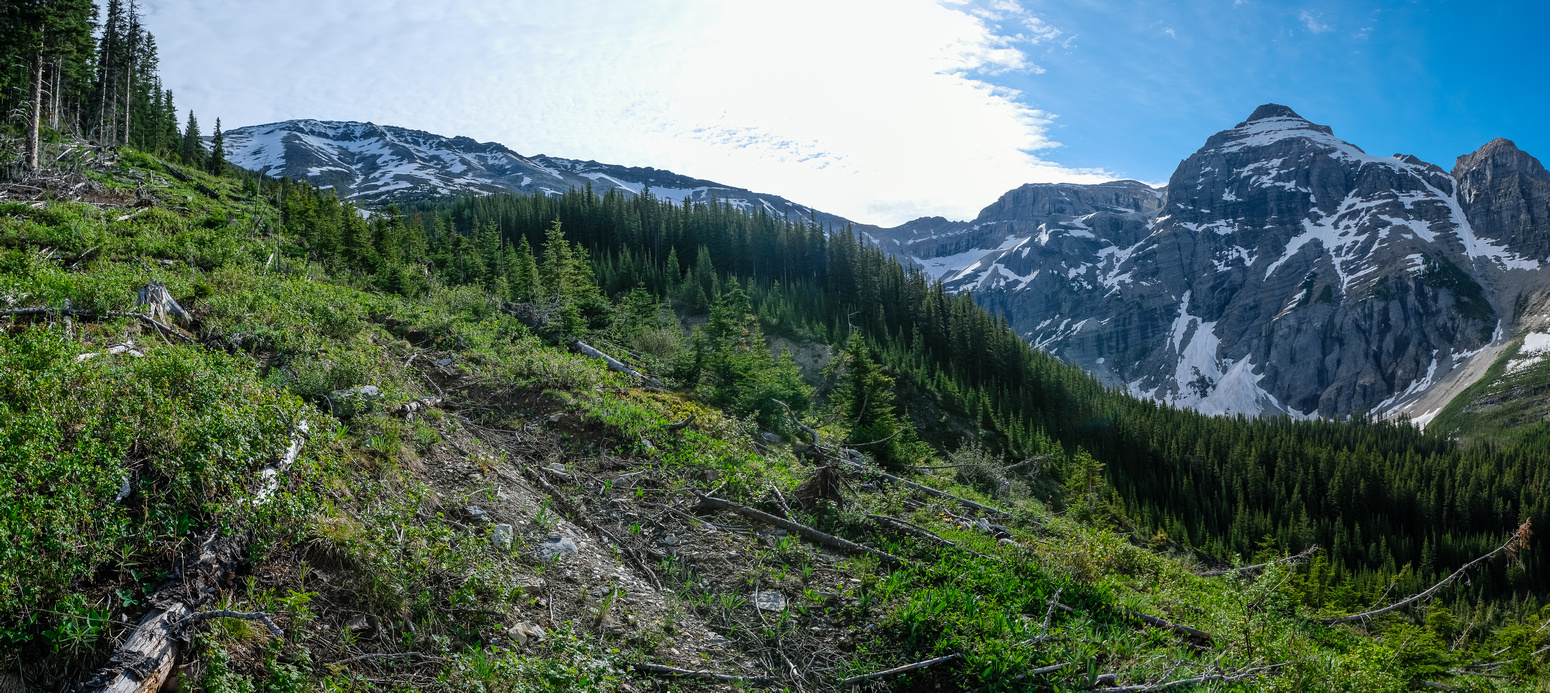 Looking up the avalanche gullies to the summit.
