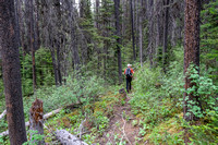 The trail to White Man Pass is a mix of good and downed trees.