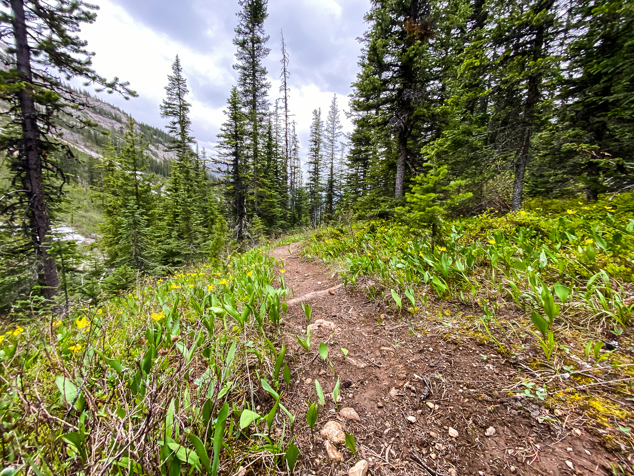 Descending the White Man Pass trail.