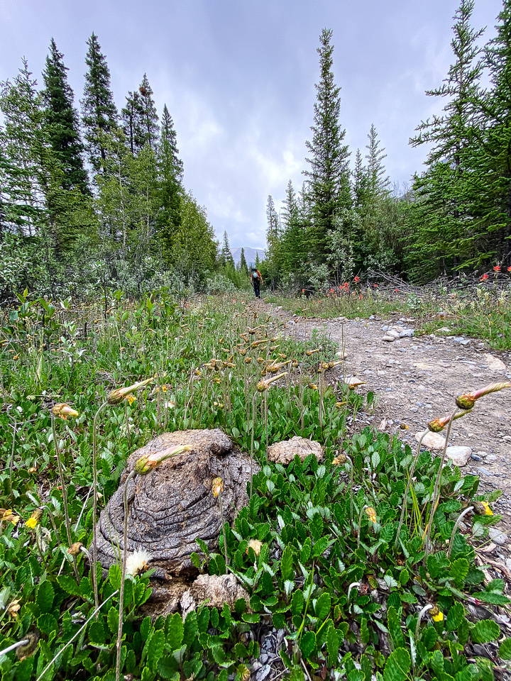 Hiking back along the Cascade fire road trail to Tinda.