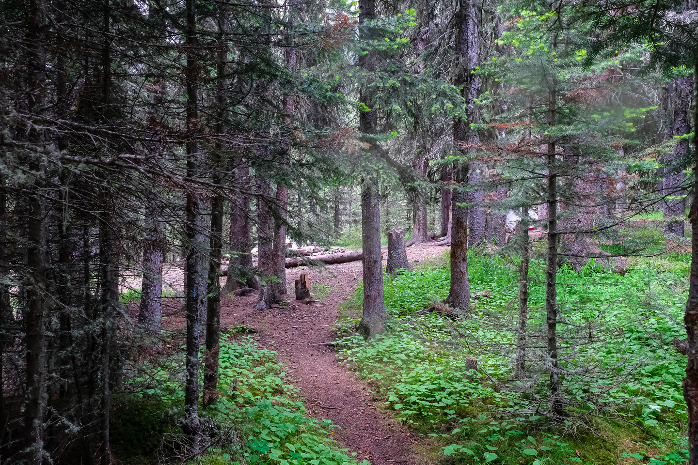 One of the large camps along the trail.