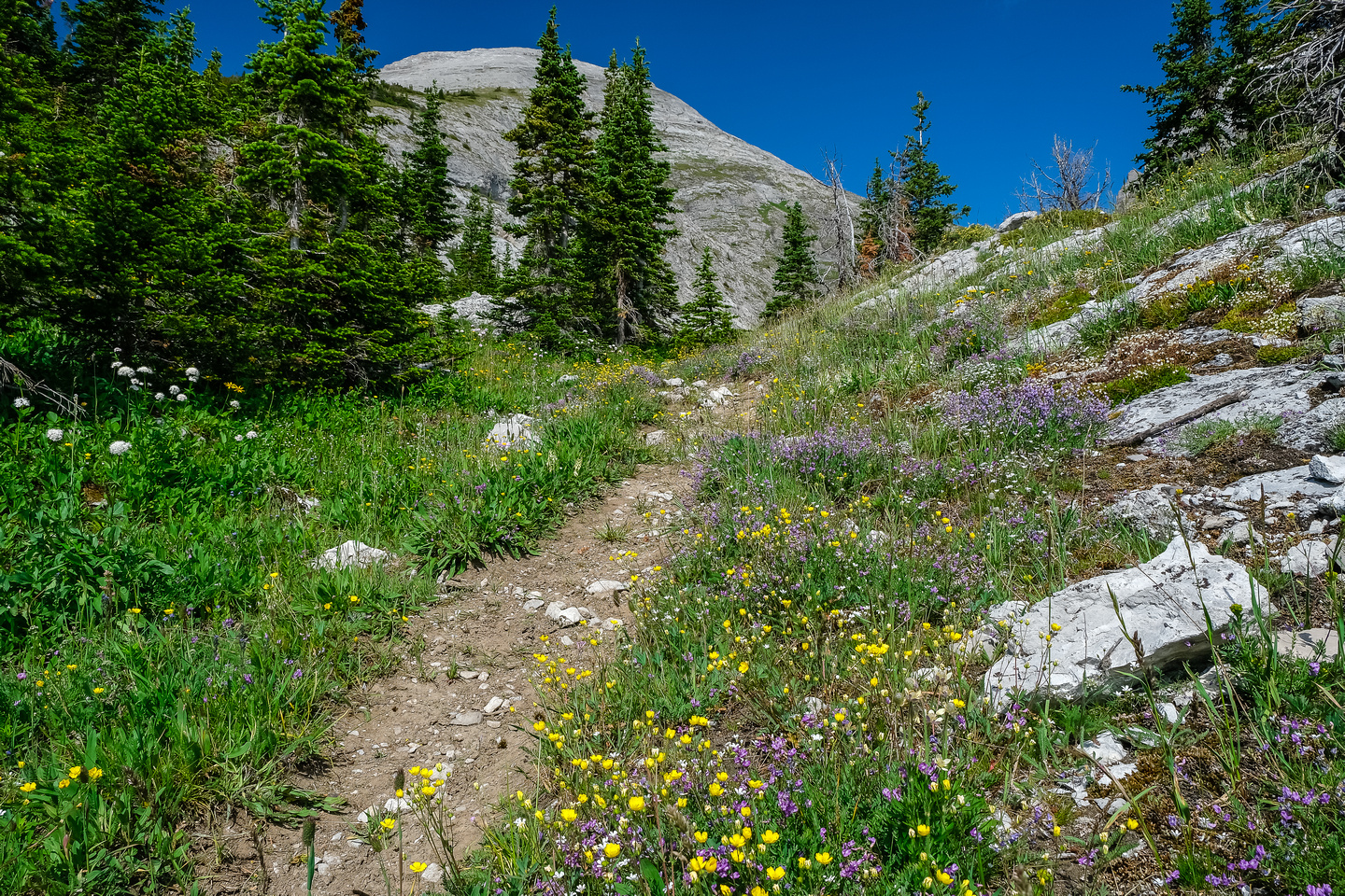 The trail approaches tree line. The pass visible above. TONS of flowers here.