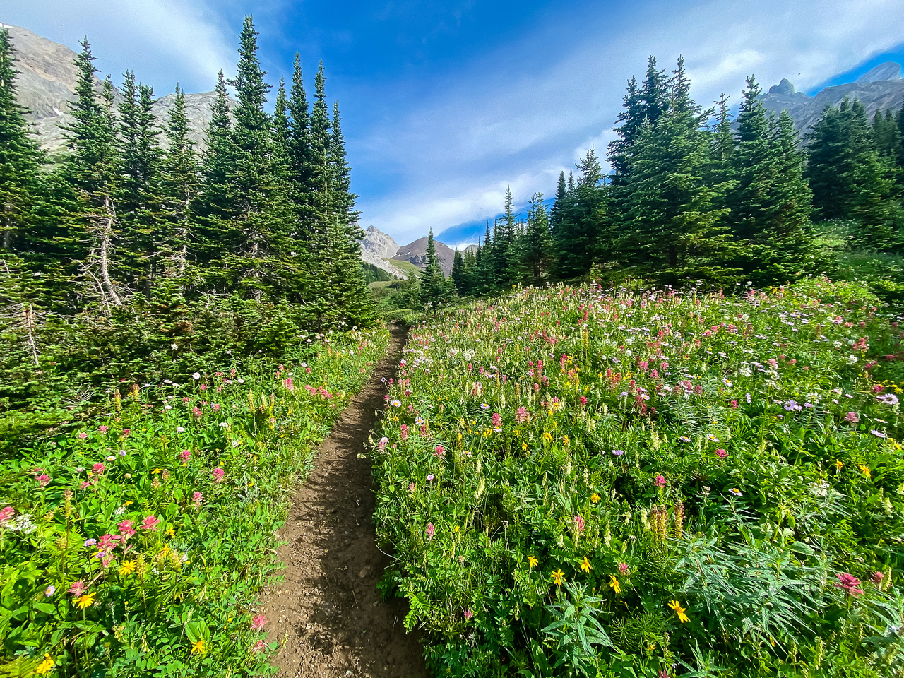 The Piper Pass trail.