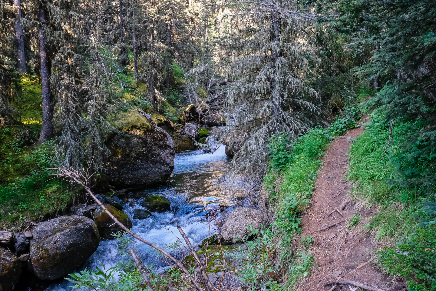 The trail up North Ribbon Creek is in good shape.