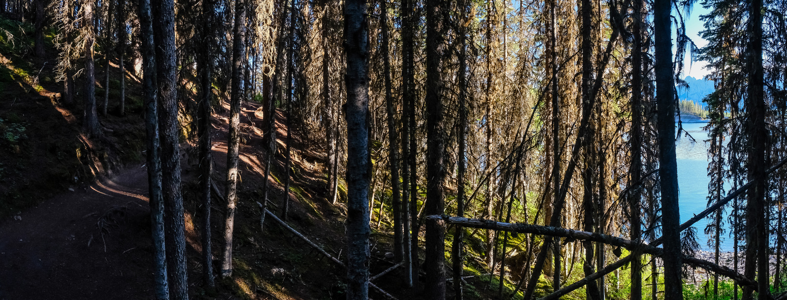 The trail around the Upper Kananaskis Lake is nice in the early morning lighting.