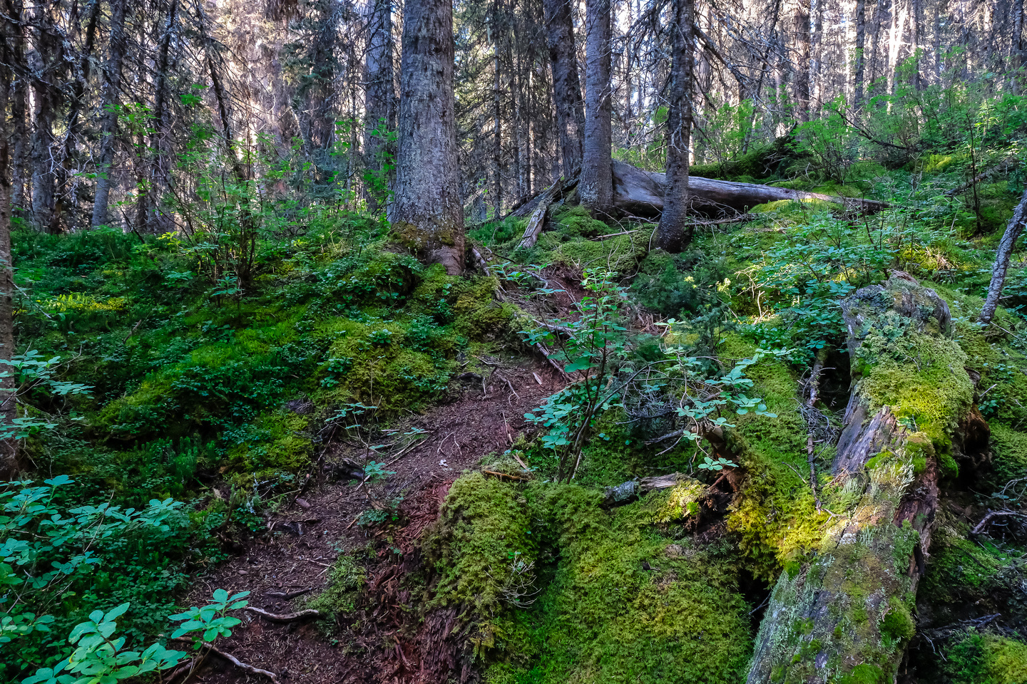 The shortcut trail into Hidden Lake is well defined but less used.