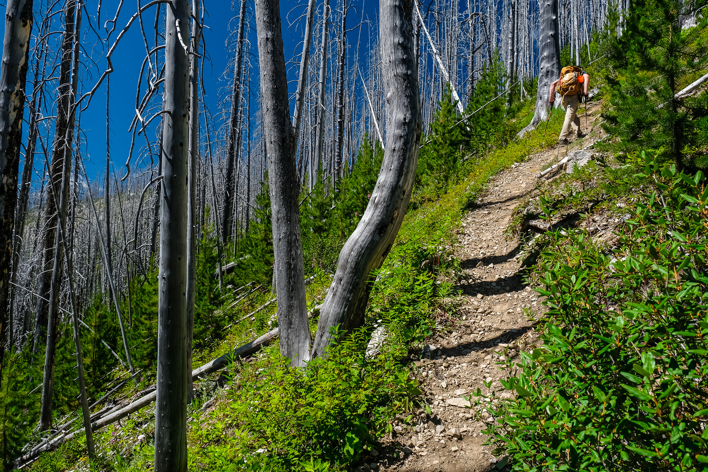 Returning up to the treed ridge from Deep Lake.