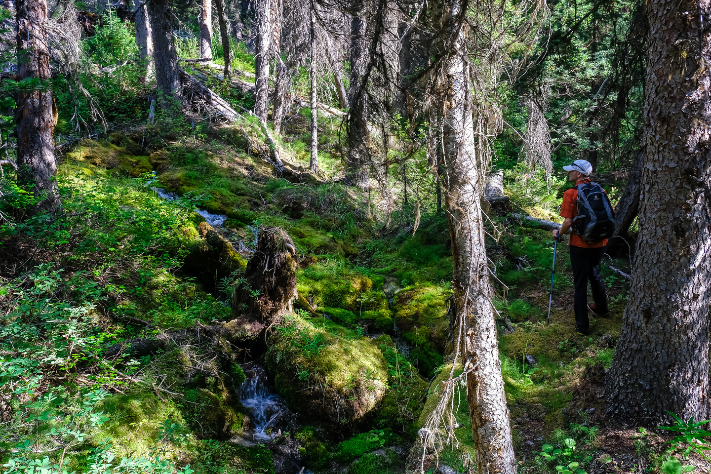 Hiking up the access creek. A mix of forest, bushwhacking, deadfall and wet feet.