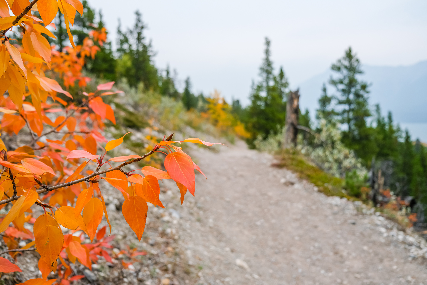 Fall colors along the Coral Creek Canyon trail.