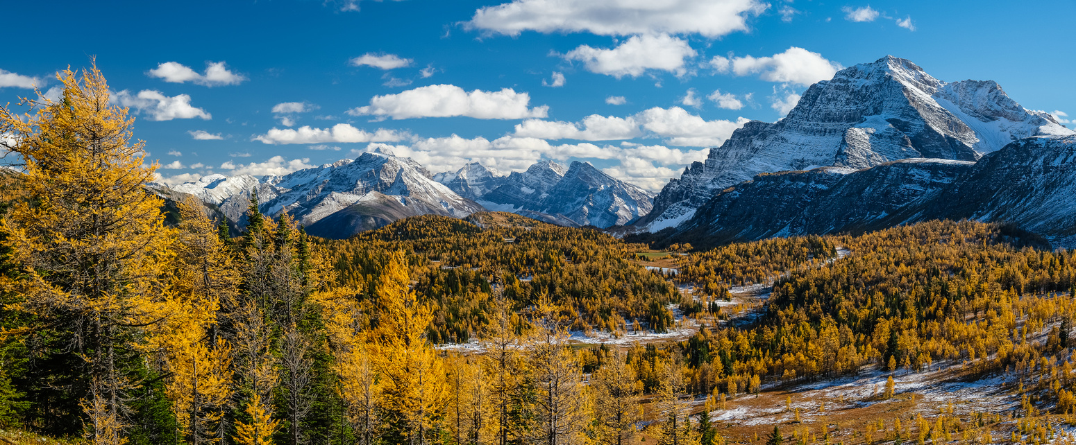 Hiking down from Healy Pass to the Healy Creek trail. Stunning larch views to The Monarch.