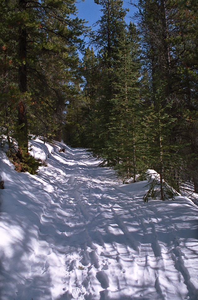 A beautiful, sunny winter day as I hike up the Skogan Pass trail.