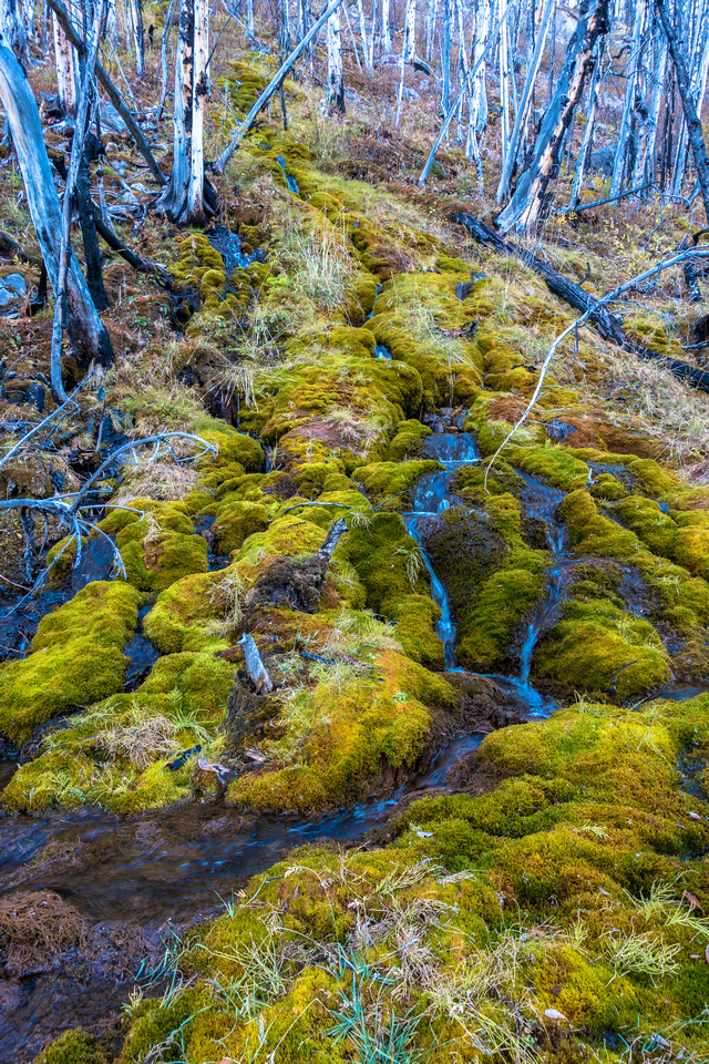 Moss on the forest floor.