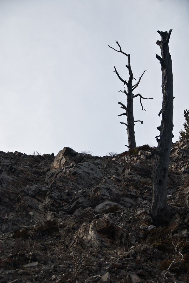 There are a lot of dead trees on the way up - making for some fantastic photography opportunities.