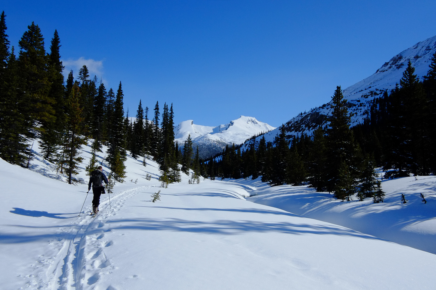 Skiing up Mosquito Creek.