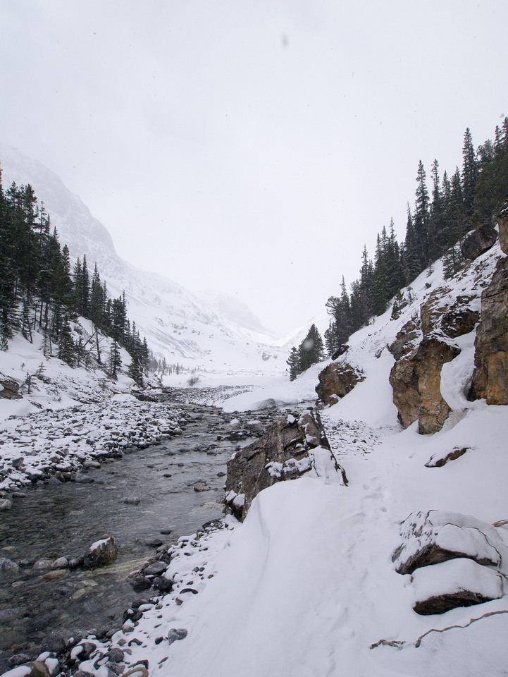 Peyto Creek is often open in the choke at the end of the lake.
