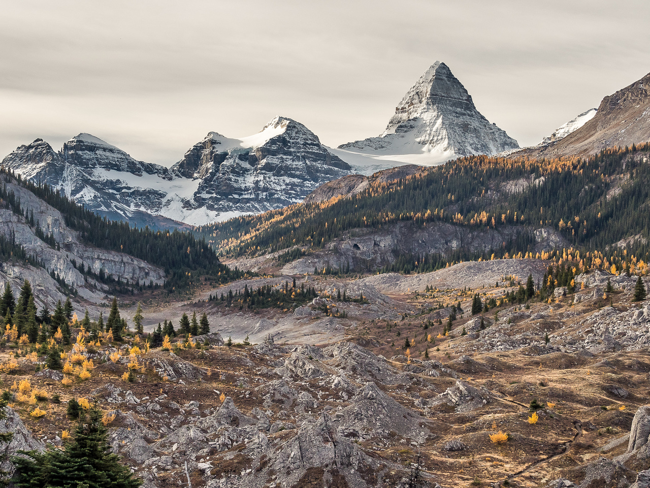 A wonderful view over the Valley of the Rocks back towards the mighty Mount Assiniboine.