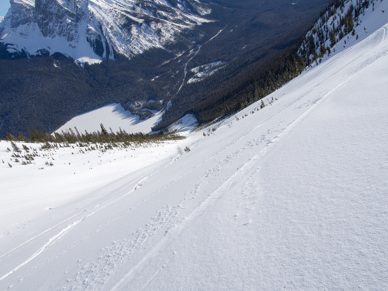 Looking down the slope - excellent snow up here! It's always over way too fast. What a waste to snowshoe something like this. :)