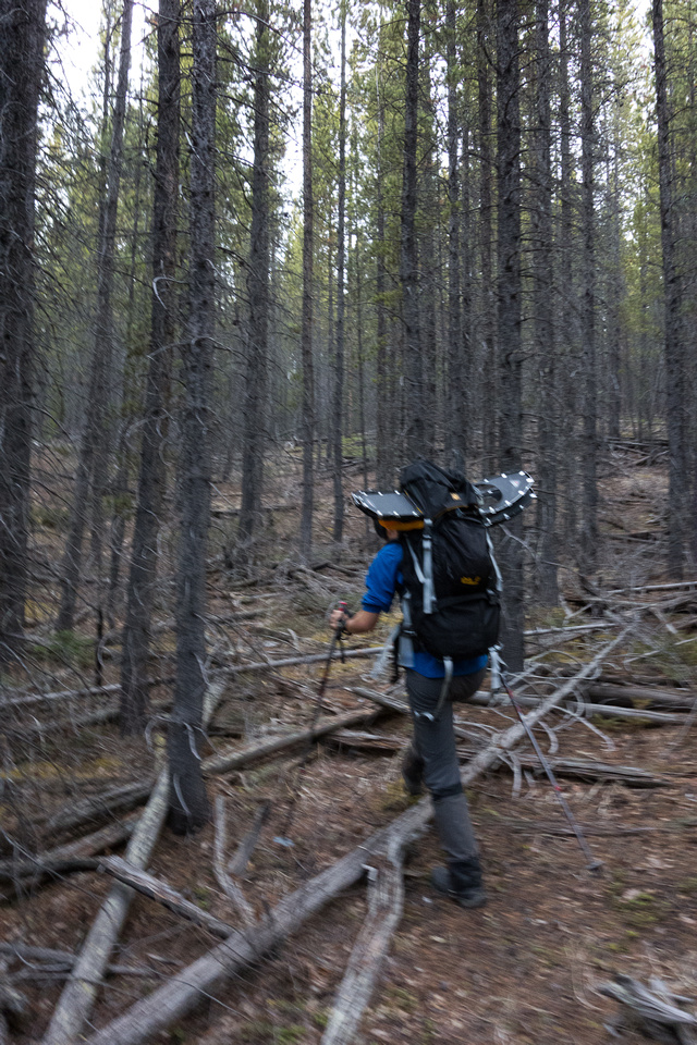 At first the forest was not very thick and we could follow a faint trail.