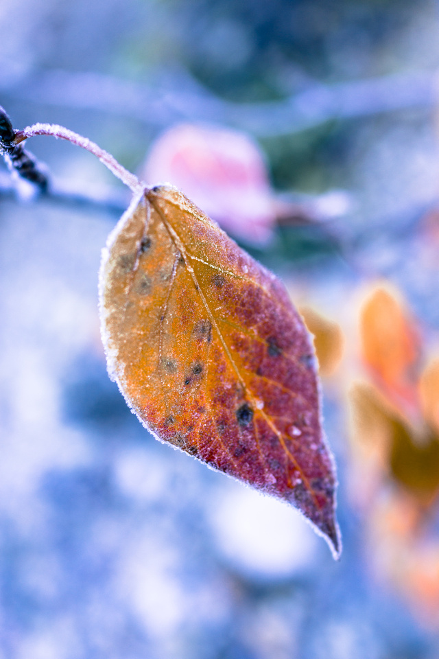 Frosty, fall morning.