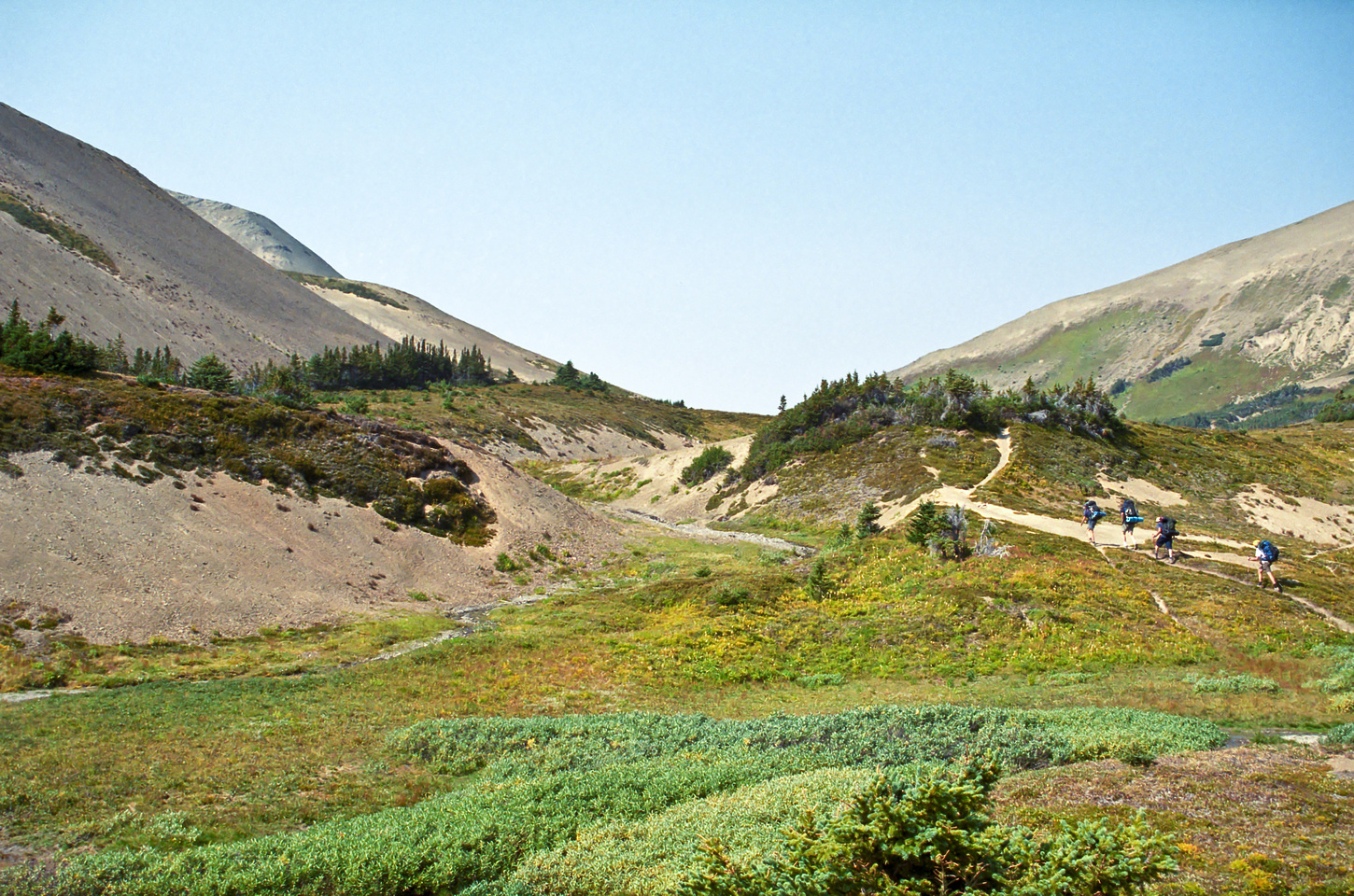 The group keeps hiking, note that we're above tree line now - other than a few pockets of trees.