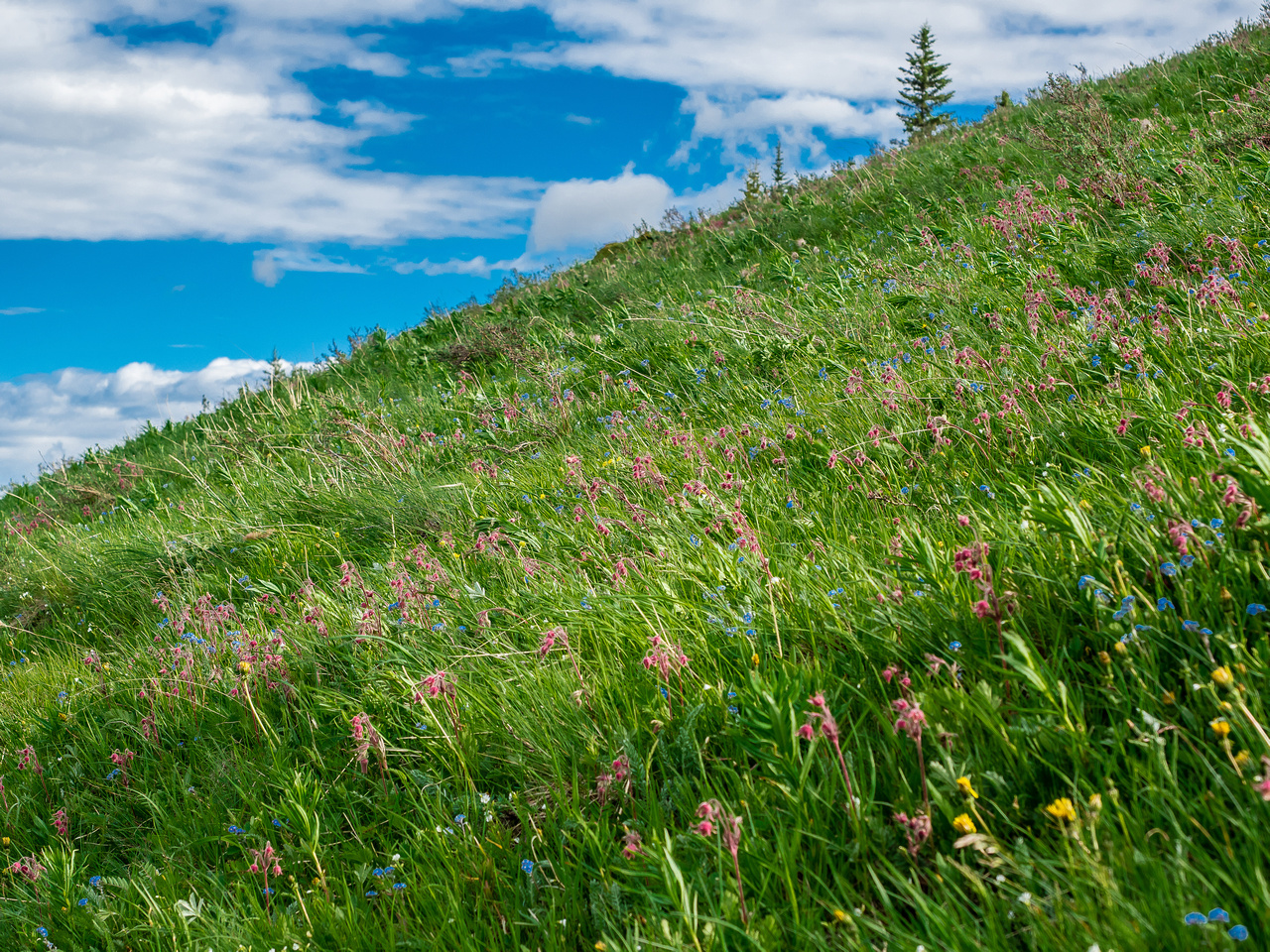 Acres of flowers along the trail in sublime alpine meadows.