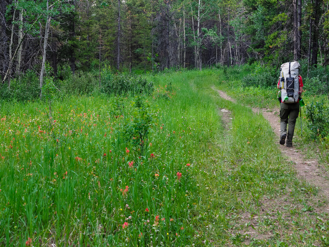 A plethora of wildflowers along the dry, wide trail.