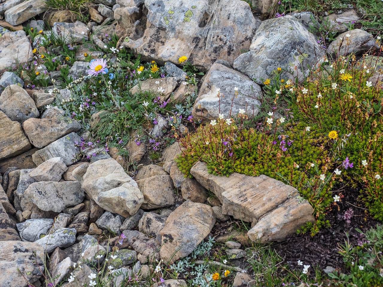Wildflowers at the col.