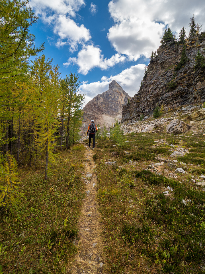 The trail from Scarab Lake is nice. Note all the larch needles already padding it.