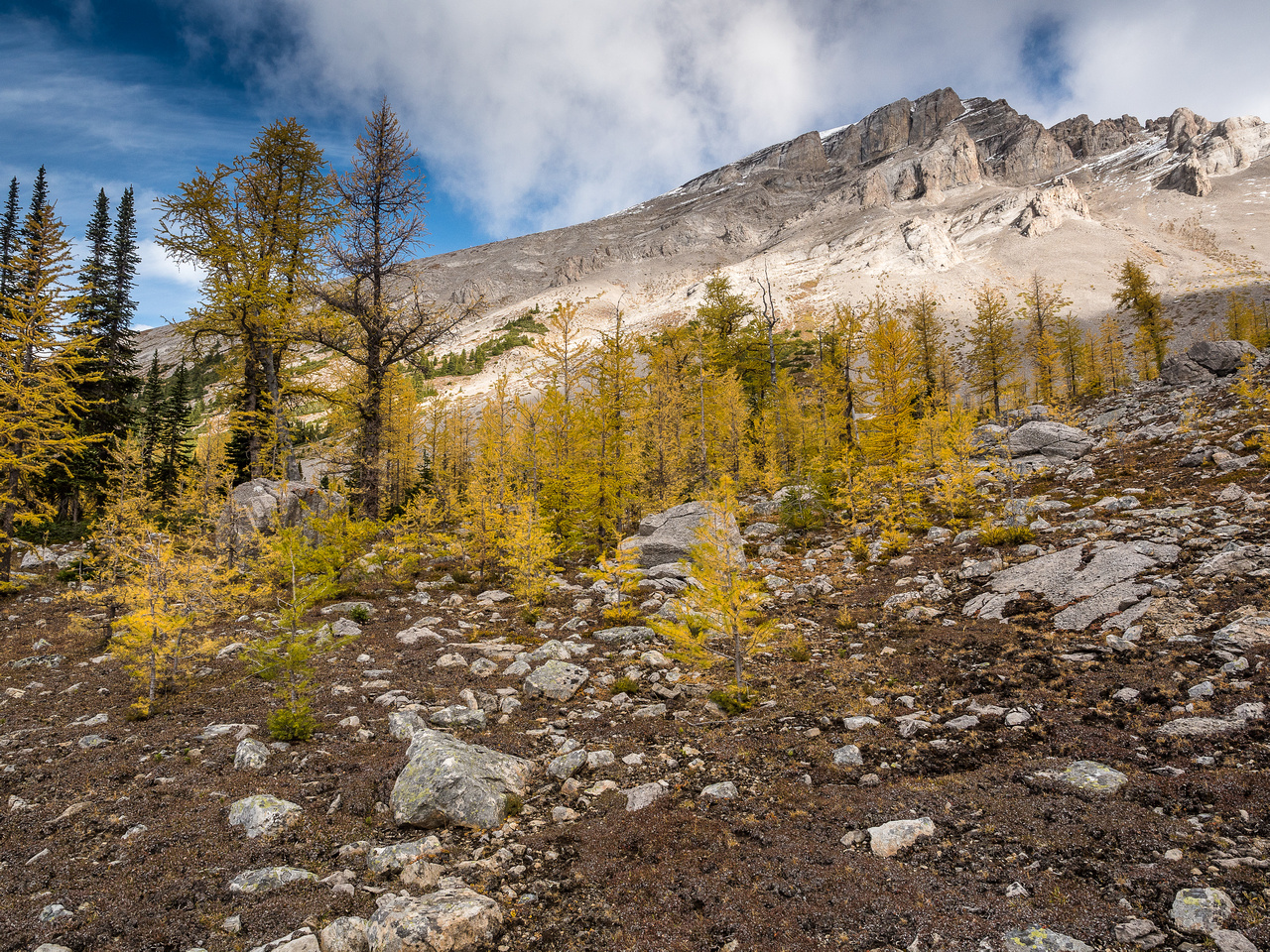 Passing through a nice larch forest on the way to Eagle Mountain.