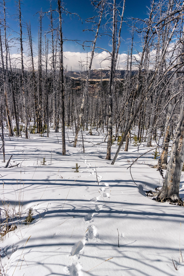 This was actually very pleasant hiking on firm snow. It broke down about 100 vertical meters from here for some reason