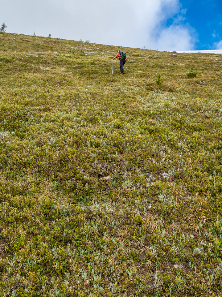 Very steep vegetated slopes to the summit above the cliff band.