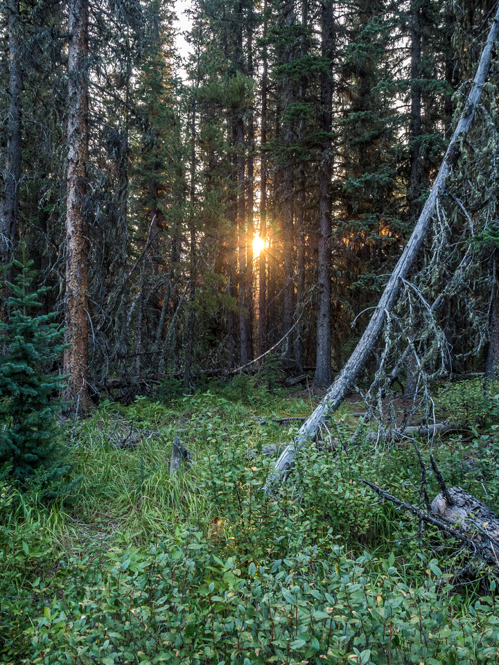 Sunrise through the forest beside the trail.