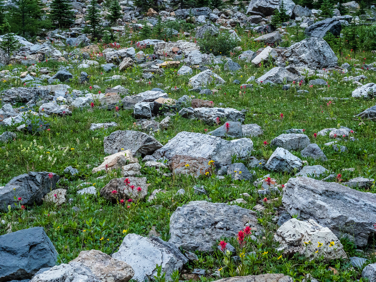 The wildflowers in the alpine valley were vibrant and thriving.
