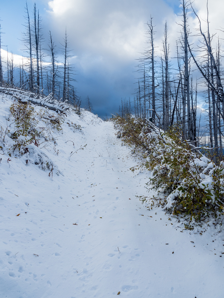 The height gain on this little hike sneaks up on you, especially with fresh snow!