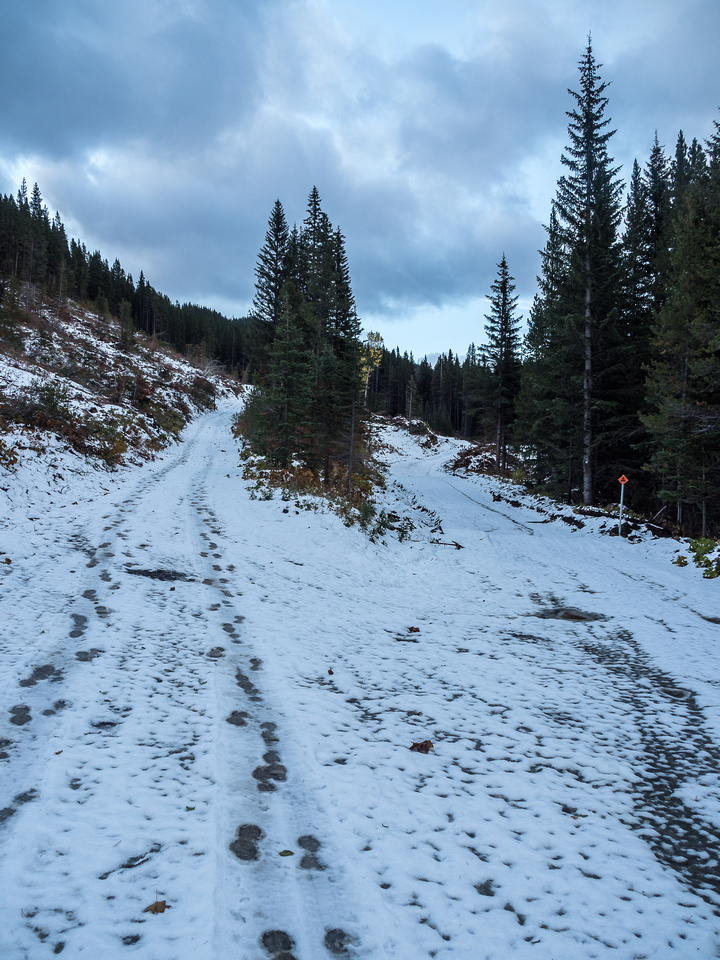 This is where the bear tracks continued up the road and I went left up the steeper, smaller road.