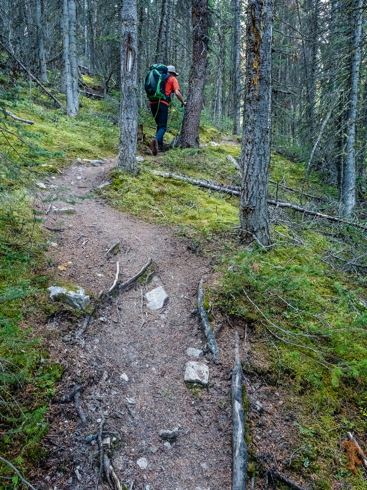 Steep forested trail to Merlin Lake.