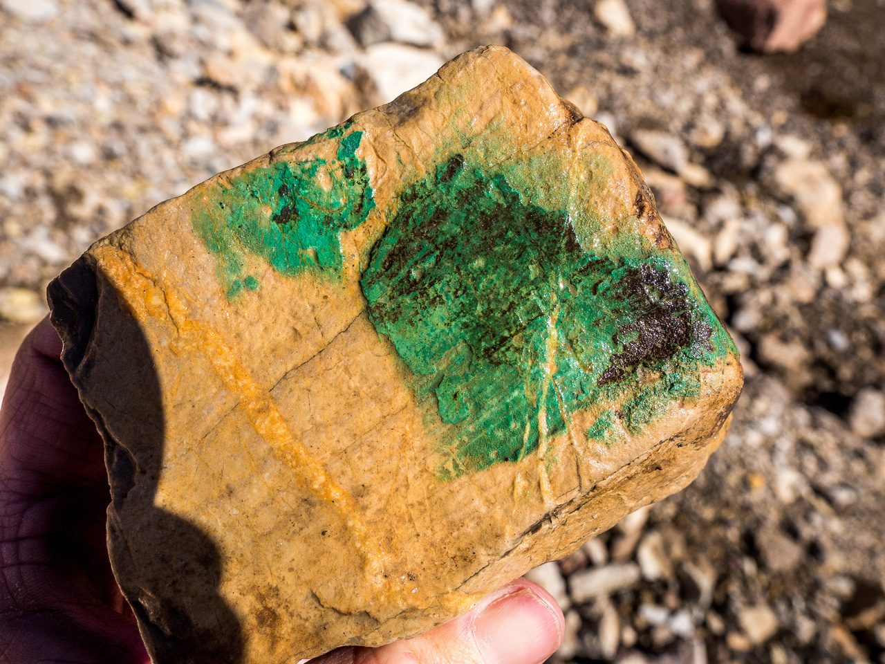 A very green coating on this rock. Not paint.