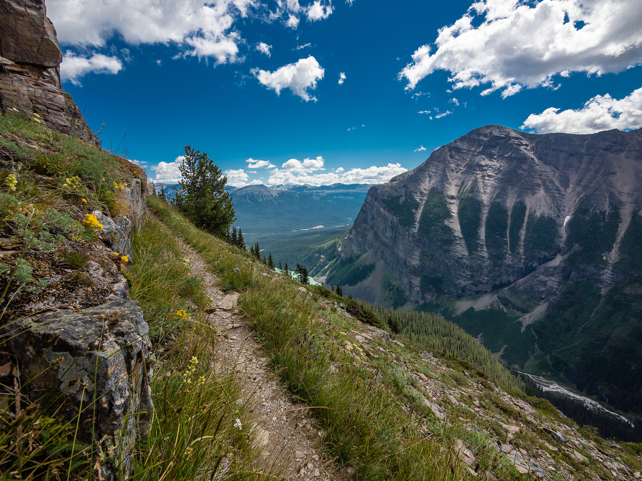 The scenic high traverse is dotted with many flowers.
