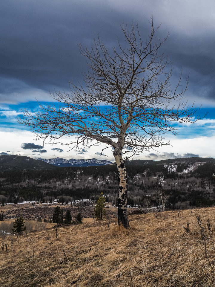 A lonely tree near the summit with the Chinook arch. Mountains in the distance include Junction and Pyriform.