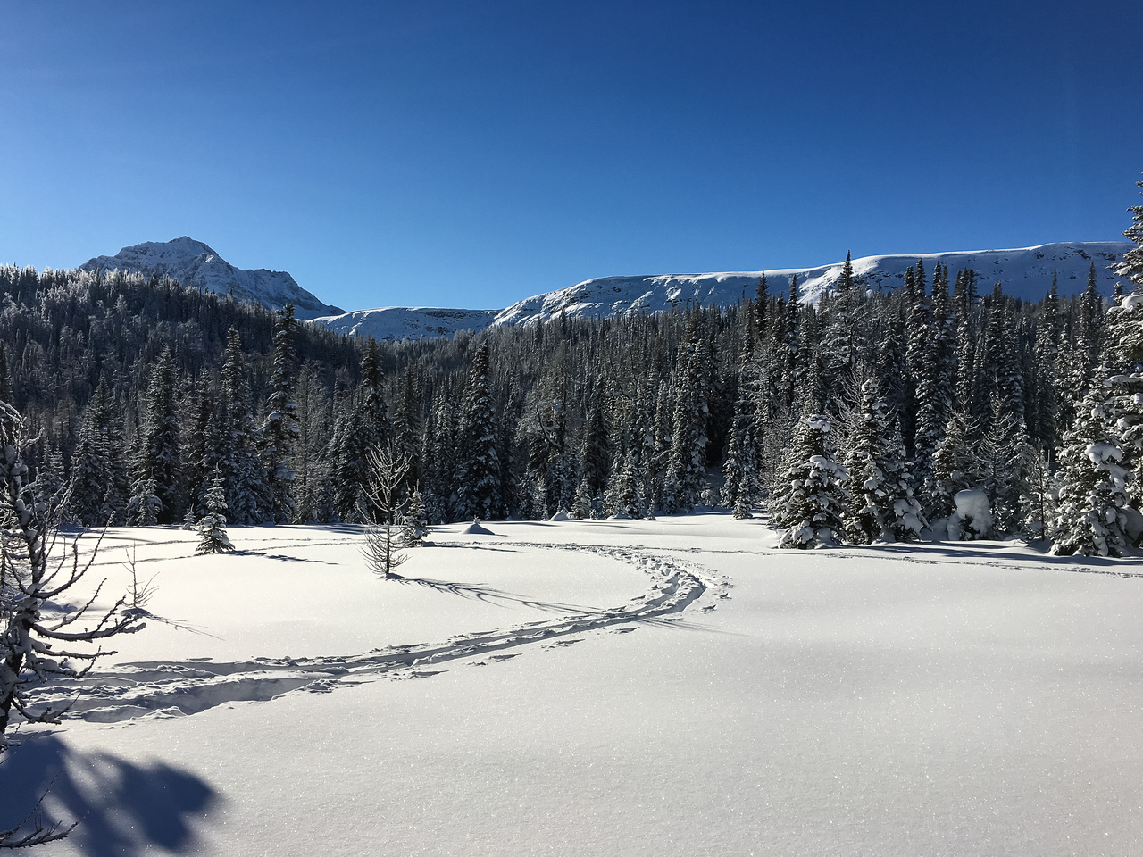 After a solid 2+ hours of skiing up the rather dull Healy Creek trail, these are the first views of The Monarch (L) with the Monarch Ramparts stretching out to the right.