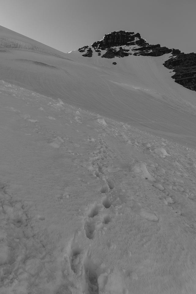 The descent was steep, on slurpee snow - this is looking up at Rudolph from the steep descent slopes which crossed over two 'schrunds.
