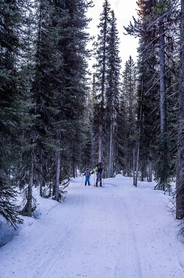 Skiing the icy xcountry ski trail - sensing a theme here yet?