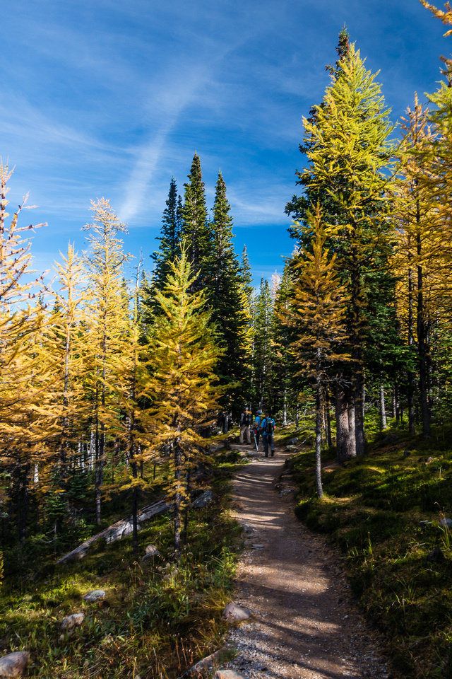In the larch forest.