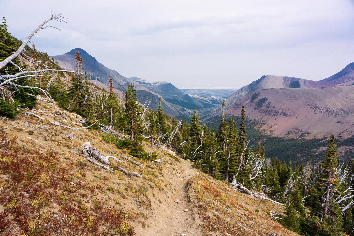 The trail stays as much above tree line as possible.