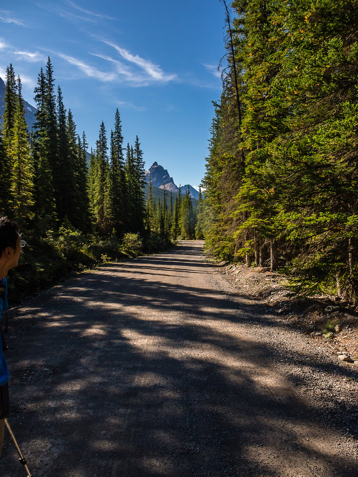 Back on the Lake O'Hara approach road.