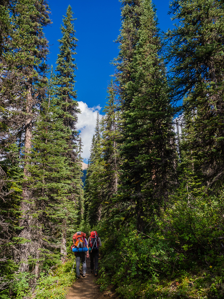 The trail gets tighter after the Little Yoho River junction.