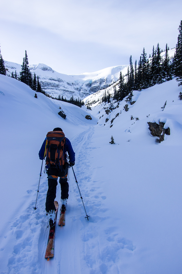 Skiing up Bow Canyon.