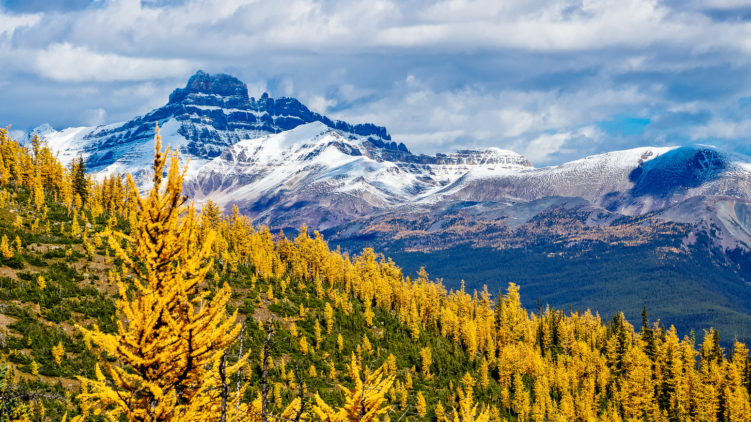Larches and Mount Hector.