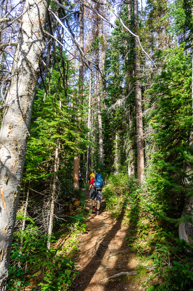 Heading up the trail to Hamilton Lake - just over 5km and much of it quite steep.