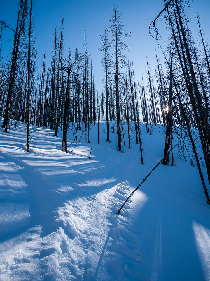 Skiing up the Vermilion Peak burn.